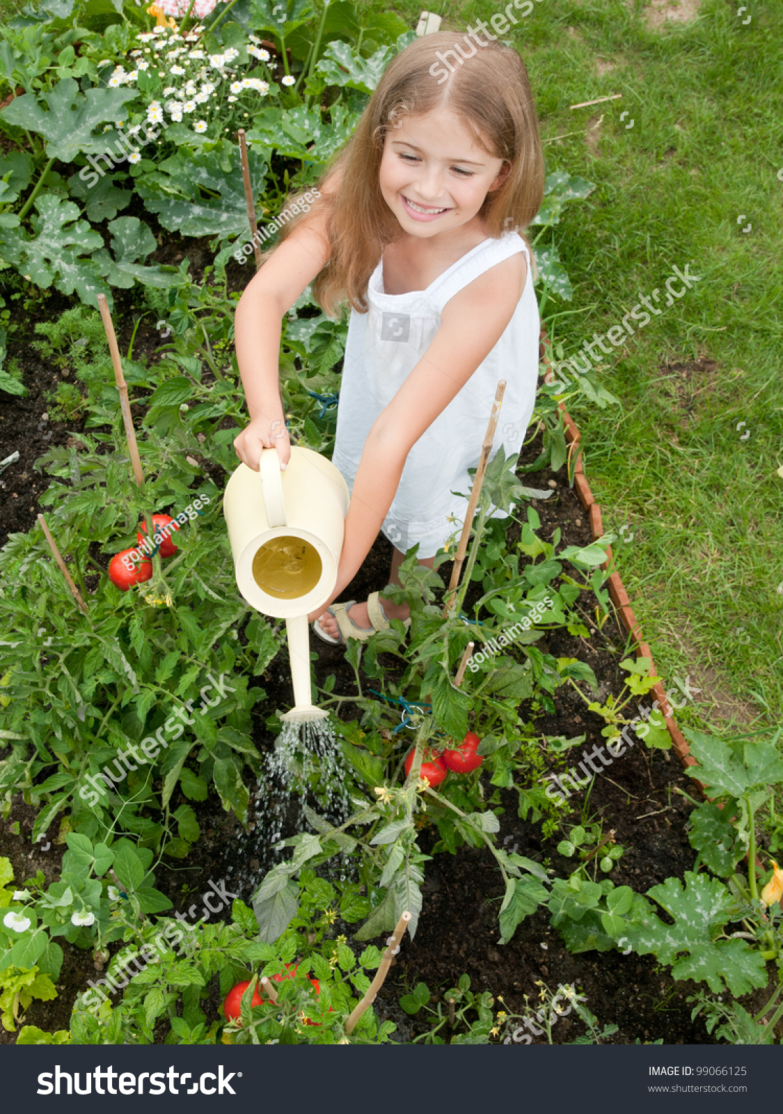 Vegetable garden lovely girl watering vegetables in the for Watering vegetable garden