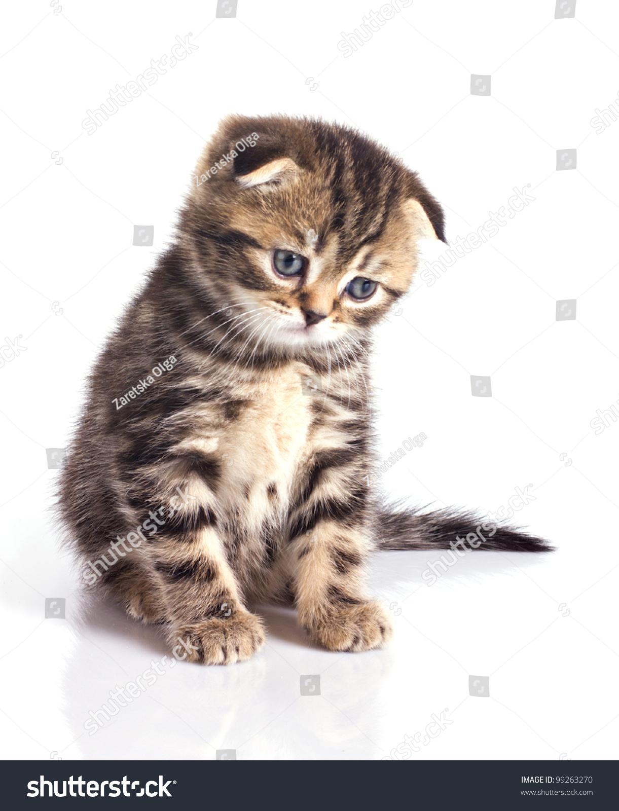 Sad Little Kitten Isolated On White Stock Photo 99263270 - Shutterstock