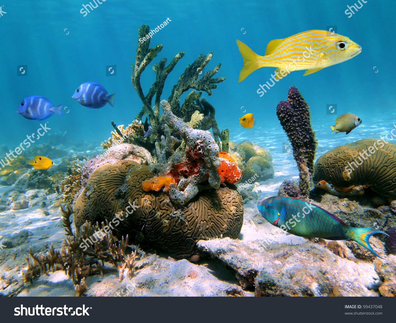 Colorful Tropical Sea Life Underwater In Caribbean Stock ... |Colorful Underwater Life