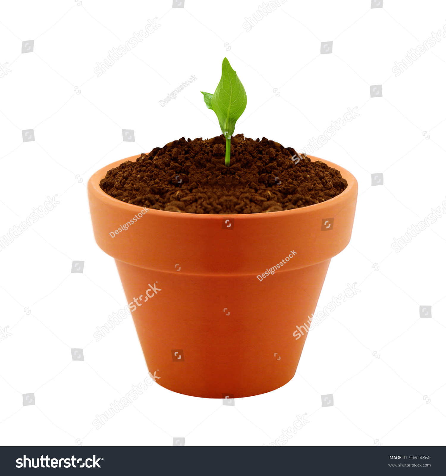 Small Plant Growing In Clay Pot Stock Photo 99624860