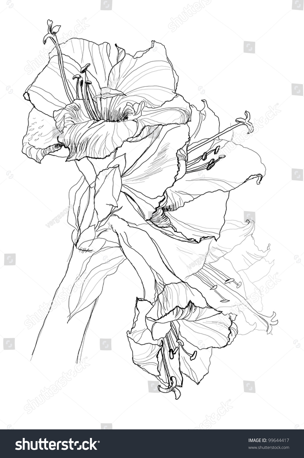 Hibiscus Flower Pencil Drawing Stock Vector Royalty Free 99644417