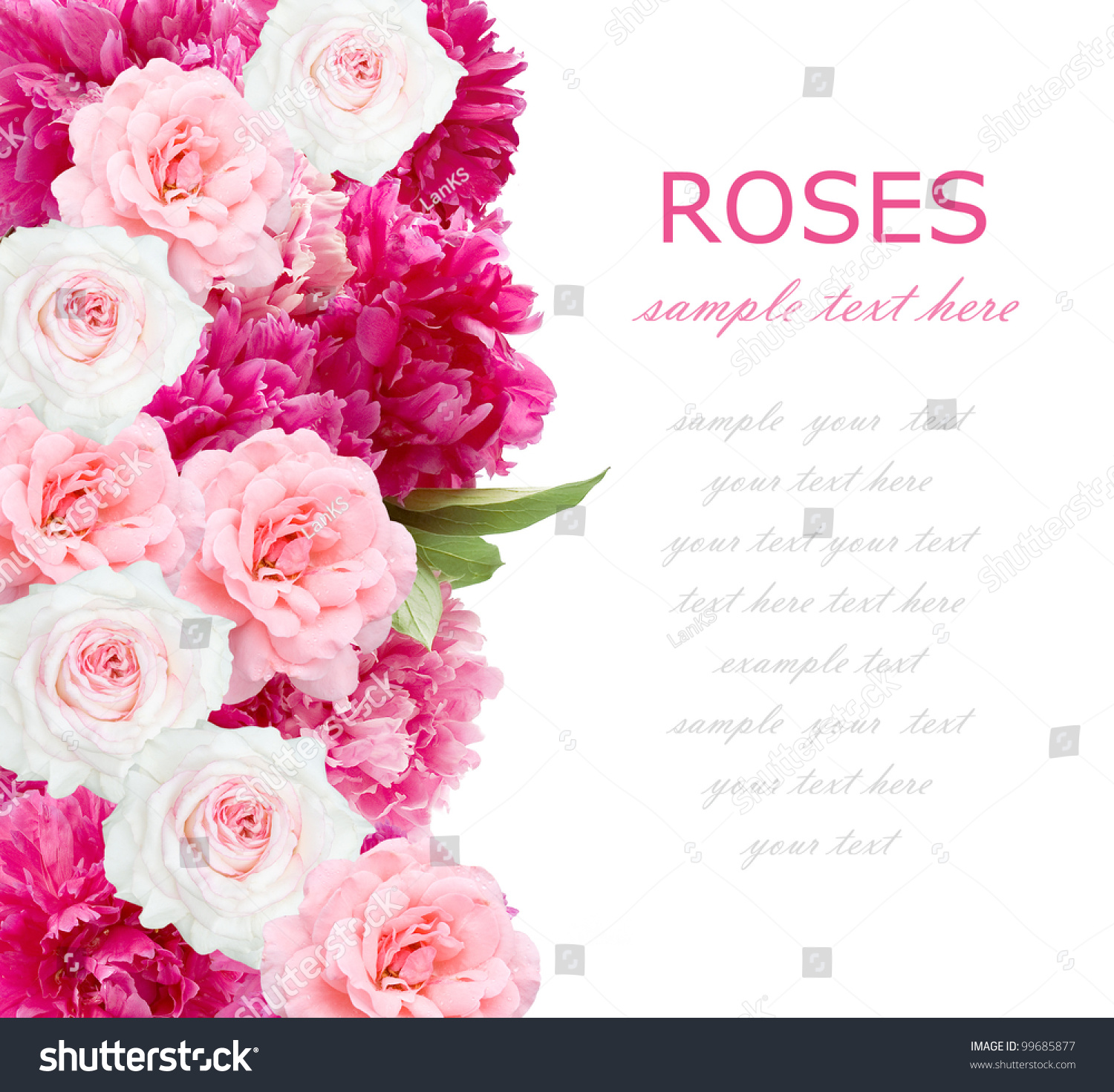 English rose garden wallpaper - Wedding Background Of Peonies And Roses Bunch Isolated On White With