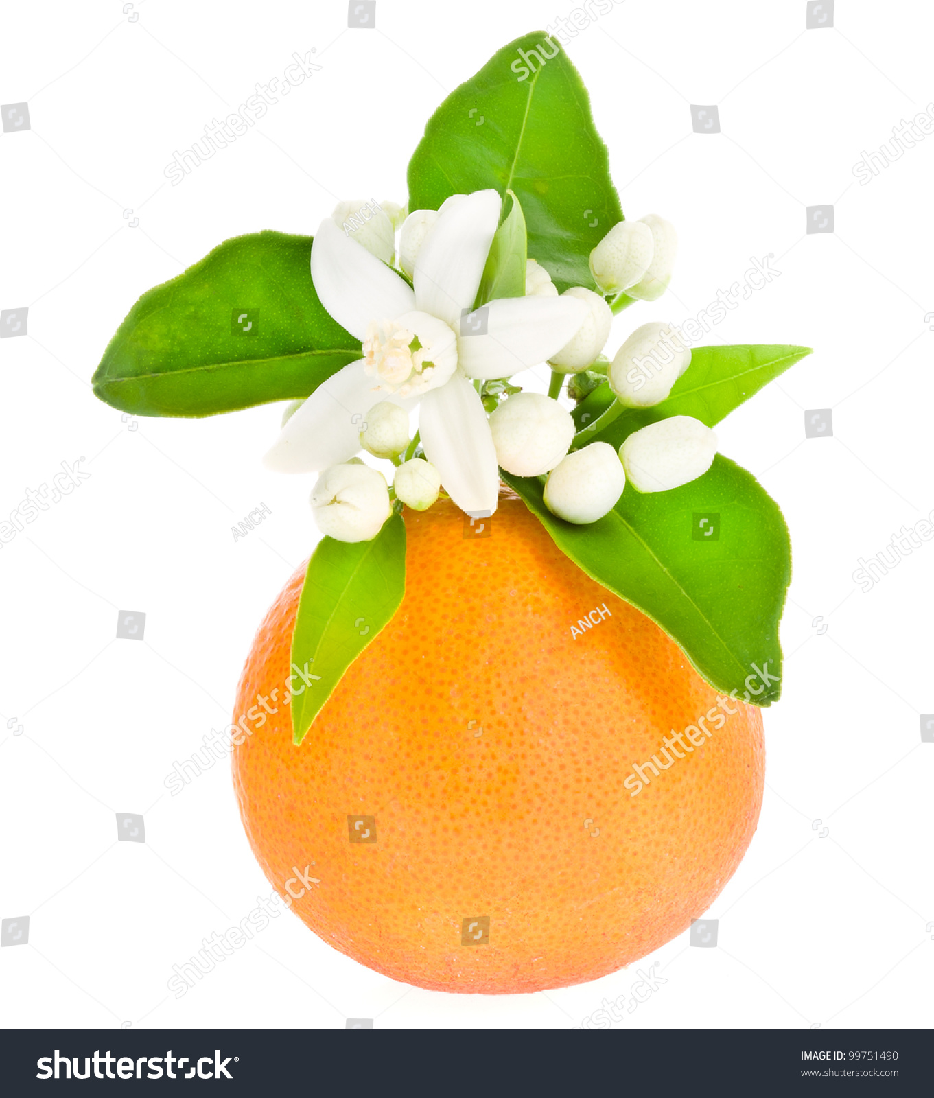 Orange Tree Flowers On A Orange Fruit Isolated On White ...