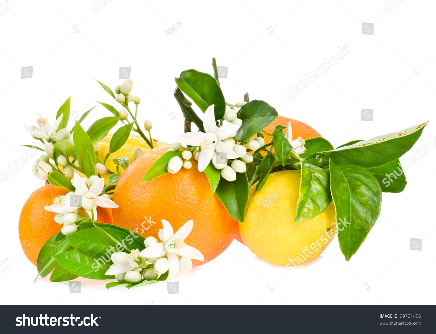 Orange Tree Flowers On A Orange Fruit And Lemon Isolated ...